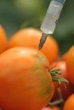 Iniezione dei pomodori Fotografia Stock