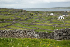 Inisheer, Aran islands, Ireland. Countryside on the Aran island of Inisheer, Ireland Royalty Free Stock Images