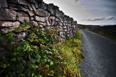 Inisheer Stone walls royalty free stock photo