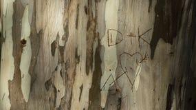 Initial lovers written in a tree trunk, eucalyptus trunk Stock Image