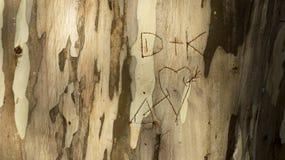 Initial lovers written in a tree trunk, eucalyptus trunk Stock Photo