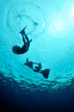 Initial meters of free dive Stock Photo