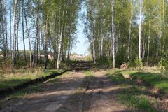 The initial stage of construction of the road to the residential complex in the village of Siberia through the forest. Clearing royalty free stock photography