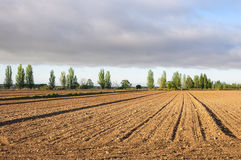 Initial stages of cornfields Royalty Free Stock Images