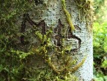 Initialer M & S som snidas in i skället av ett alträd på de Sauk nedgångarna, skuggar i Darrington, WA royaltyfria foton