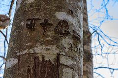 Initials carved into a tree Royalty Free Stock Photos