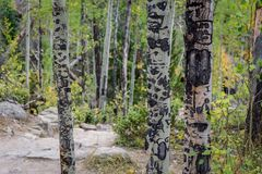 Initials carved into tree trunks in woods Stock Photo