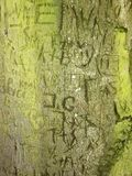 Initials Memory Carving in Green Bark on Old Tree Royalty Free Stock Image