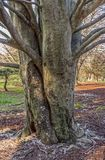 Initials in Tree Trunk. Initials carved in this tree trunk in Holmdel Park in New Jersey Stock Photography