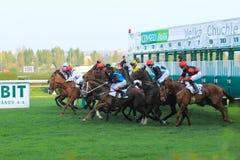 Inizi nella corsa di cavalli a Praga immagini stock libere da diritti
