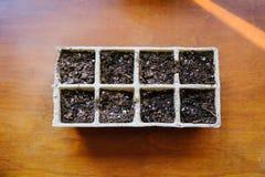 Iniziando i semi all'interno in primavera in anticipo Immagini Stock