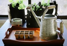 Iniziando un giardino all'interno Immagini Stock Libere da Diritti