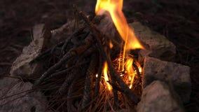 Iniziare fuoco di campeggio al campo nella foresta che fa falò, processo bruciante Priorità bassa della natura r cozy video d archivio