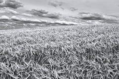 Inizio dell'estate in in bianco e nero Immagine Stock