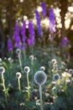 Inizio dell'estate nel giardino fotografia stock