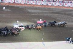 Inizio delle corse di Chuckwagon alla fuga precipitosa di Calgary Fotografie Stock Libere da Diritti