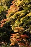 Inizio delle foglie di autunno nell'ambito di luce solare fotografie stock