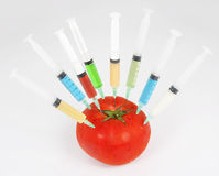 Injected tomato Stock Photography