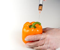 Injecting a gmo bell pepper Royalty Free Stock Photography