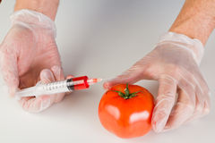 Injecting a gmo tomato Royalty Free Stock Images