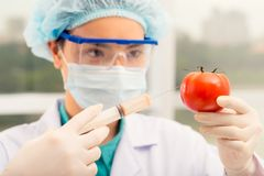 Injecting tomato Stock Images