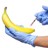 Injection into banana isolated on white background. Genetically modified fruit and syringe Stock Photos