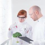 Injection de brocoli de laboratoire Images stock