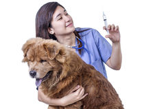 Injection For A Sick Dog. Lady veterinary doctor with a dog preparing a syringe with medicine for a sick dog. Isolated in white background Stock Images