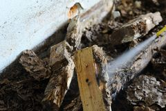 Injection termite control Royalty Free Stock Images