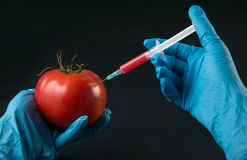 Injection into tomato Royalty Free Stock Image