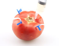 The injection of tomatoes Royalty Free Stock Images