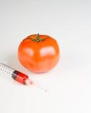 Injektionsspruta och gmo-tomat Arkivbilder