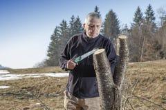 Mediados de sawing envejecido del jardinero del hombre, árbol frutal del corte Fotografía de archivo