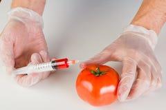 Injicera en gmo-tomat Royaltyfria Bilder