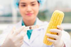 Injicera GMO royaltyfria bilder