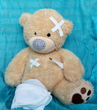 The injured bear Royalty Free Stock Image