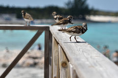 Injured bird Royalty Free Stock Photos