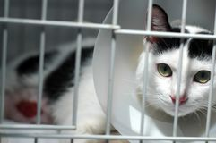 Injured Cat. An injured cat wearing a cone collar resting in her cage at vet Royalty Free Stock Photography