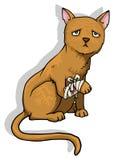 Injured cat. Sad Cat with a bandage leg Royalty Free Stock Photos