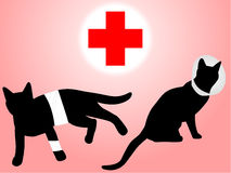 Injured cats Royalty Free Stock Images