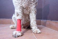 injured dog with bandaged leg