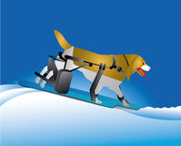 Injured dog skiing Stock Images