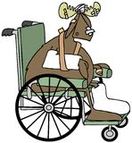 Injured moose in a wheelchair Stock Photo