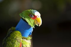 Injured pet bird recovering Royalty Free Stock Photography