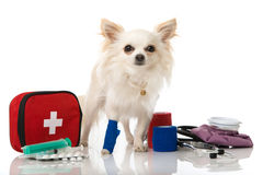 Injured puppy with first aid Stock Images