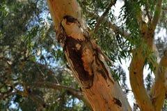 Injured tree Stock Image