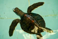 Injury Turtle Stock Photo