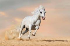 Inkörd öken för häst Royaltyfri Foto