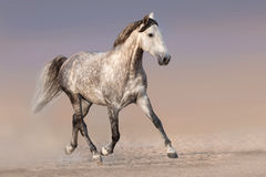 Inkörd sand för häst Royaltyfria Foton