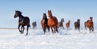Inkörd snö för häst royaltyfria foton